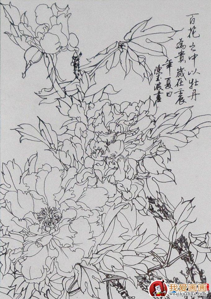 工笔画白描牡丹图片大全,线描牡丹花图谱系列(6)