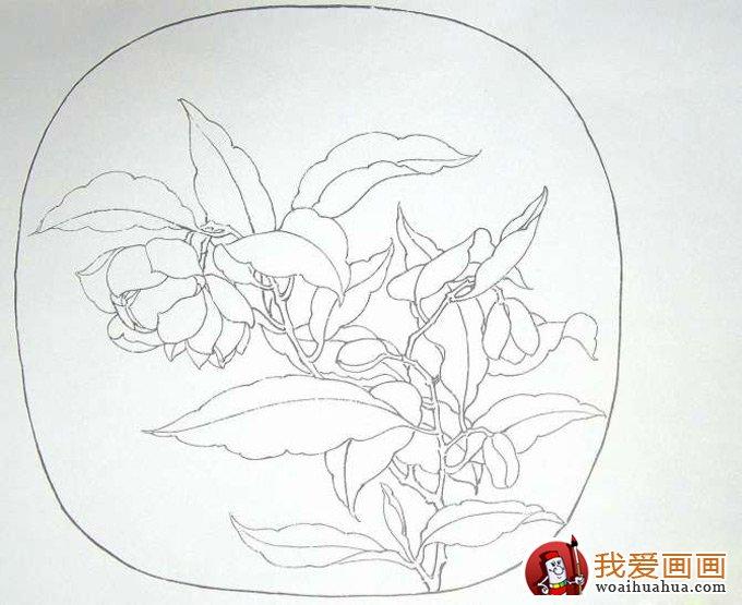 国画工笔花卉教程:临摹工笔画《夜合花图》的步骤(2)