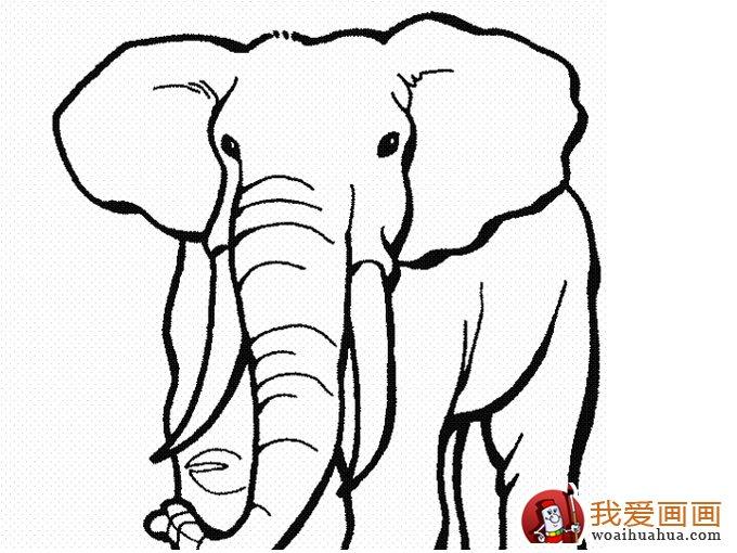 大象简笔画:儿童简笔画大象图片(4)
