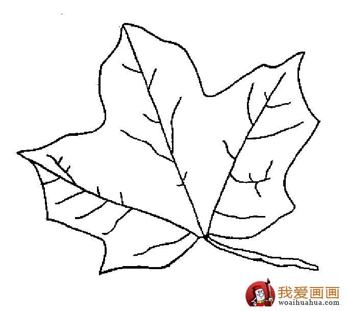 关于树叶的简笔画,各种树叶简笔画图片(2)