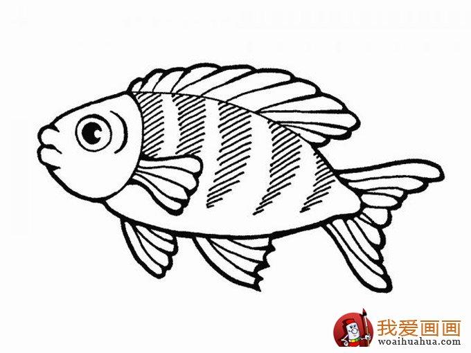 简笔画鱼 各种各样鱼的简笔画图片大全(3)