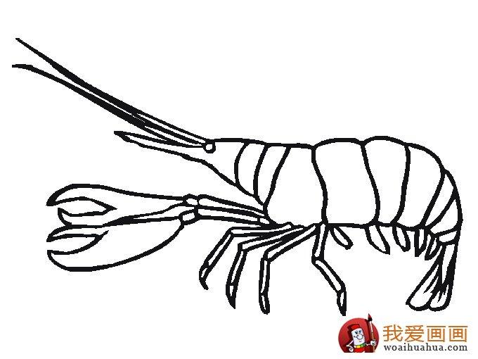 可爱简笔画欣赏:可爱的小动物简笔画(7)