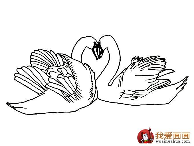 简笔画天鹅 7副高清天鹅的简笔画图片图片
