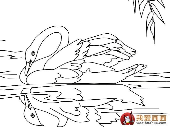 简笔画天鹅:7副高清天鹅的简笔画图片(5)