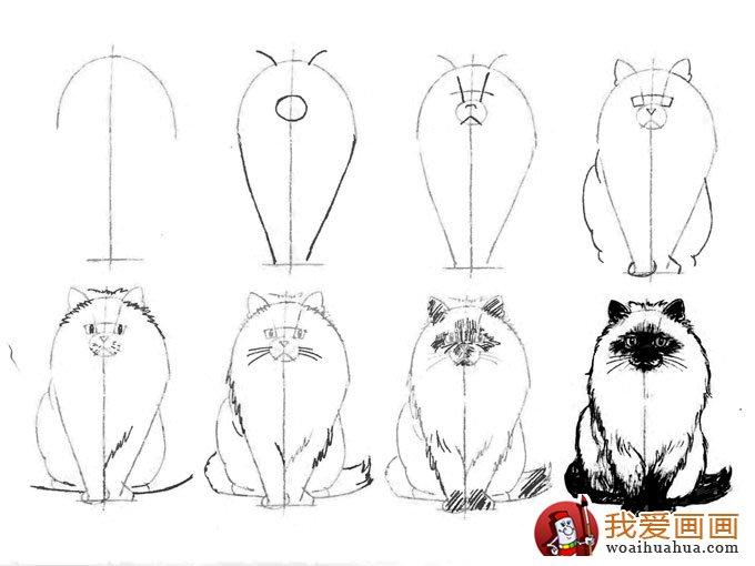 教你画20种猫的素描结构步骤图