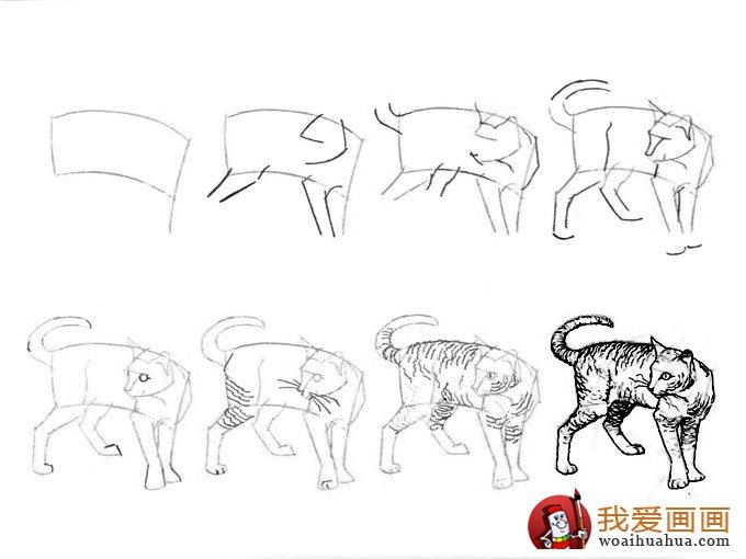 素描猫咪画法步骤