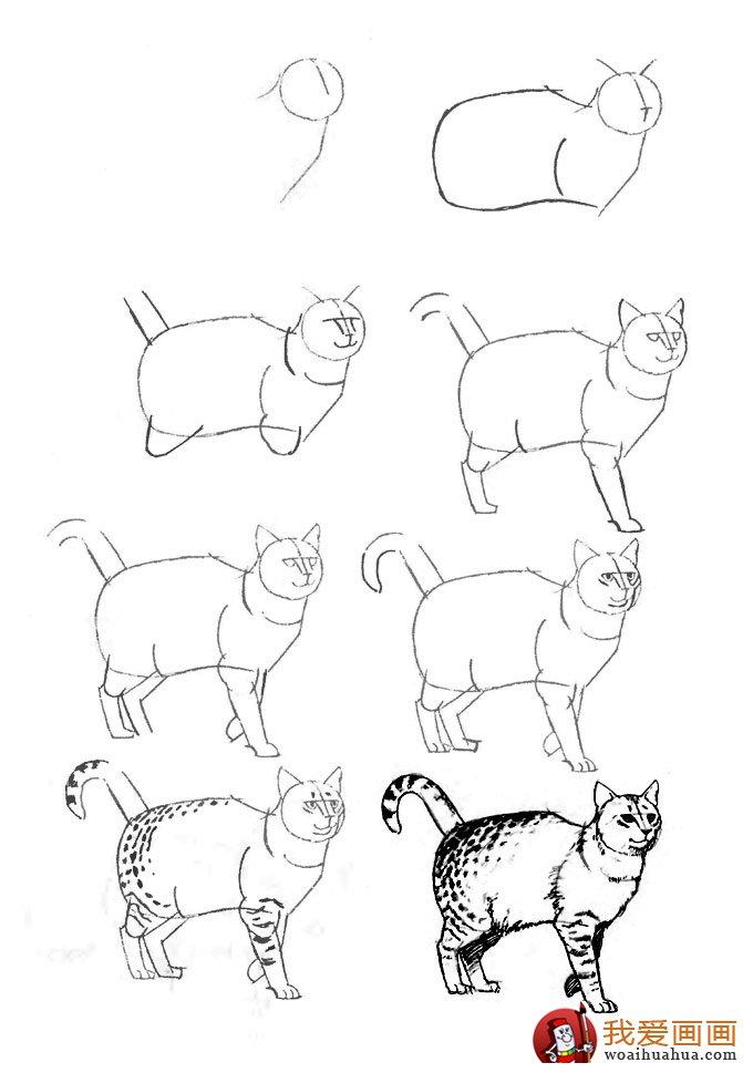 猫的22种画法 9 猫咪线描速写教程之狸猫行走姿势