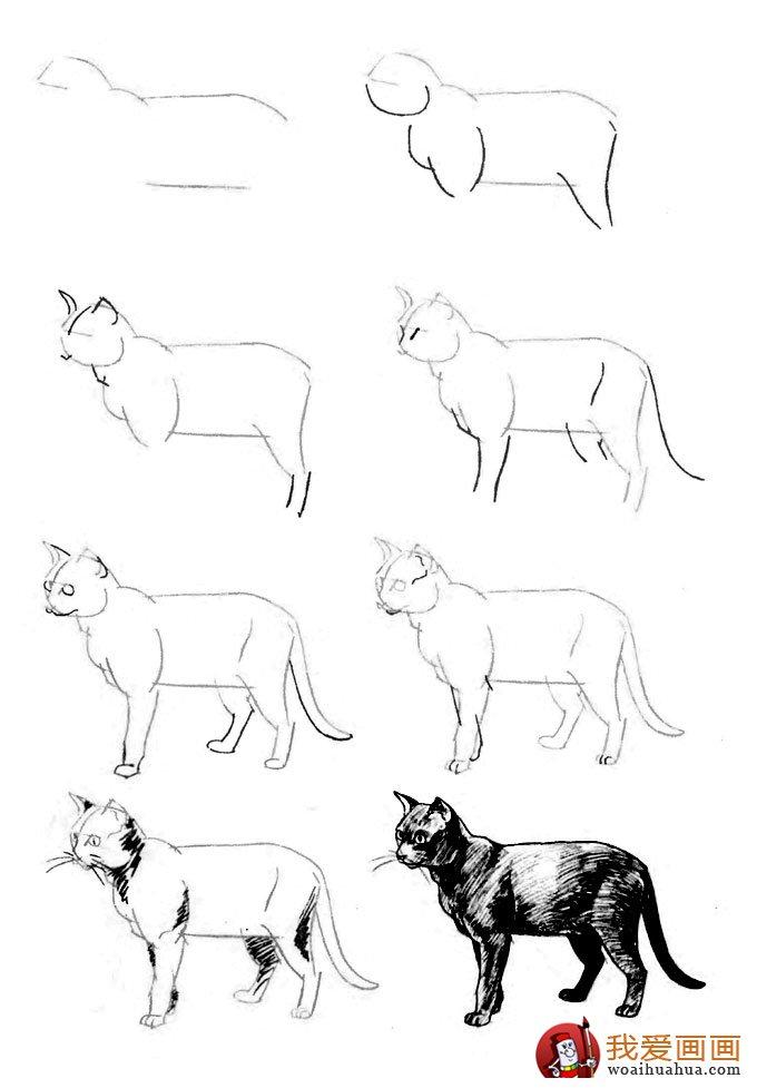 点击: 次   猫的22种画法(13)---猫咪线描速写教程之站立着的