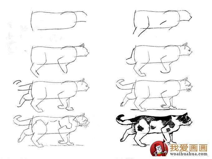 猫的22种画法(15)---猫咪线描速写教程行走中的黑白