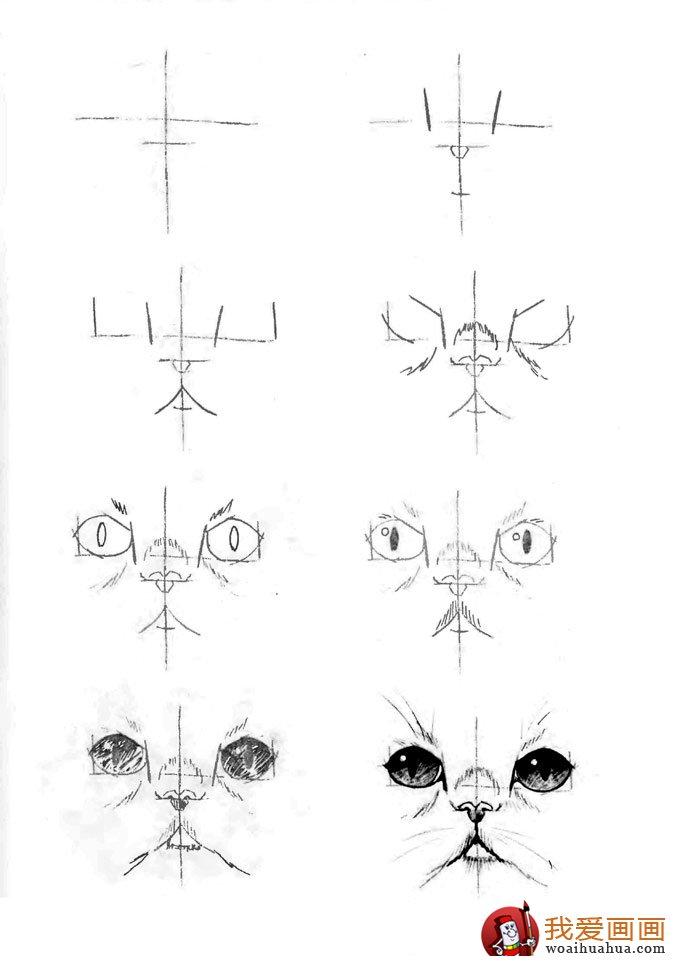 脸部位置结构图