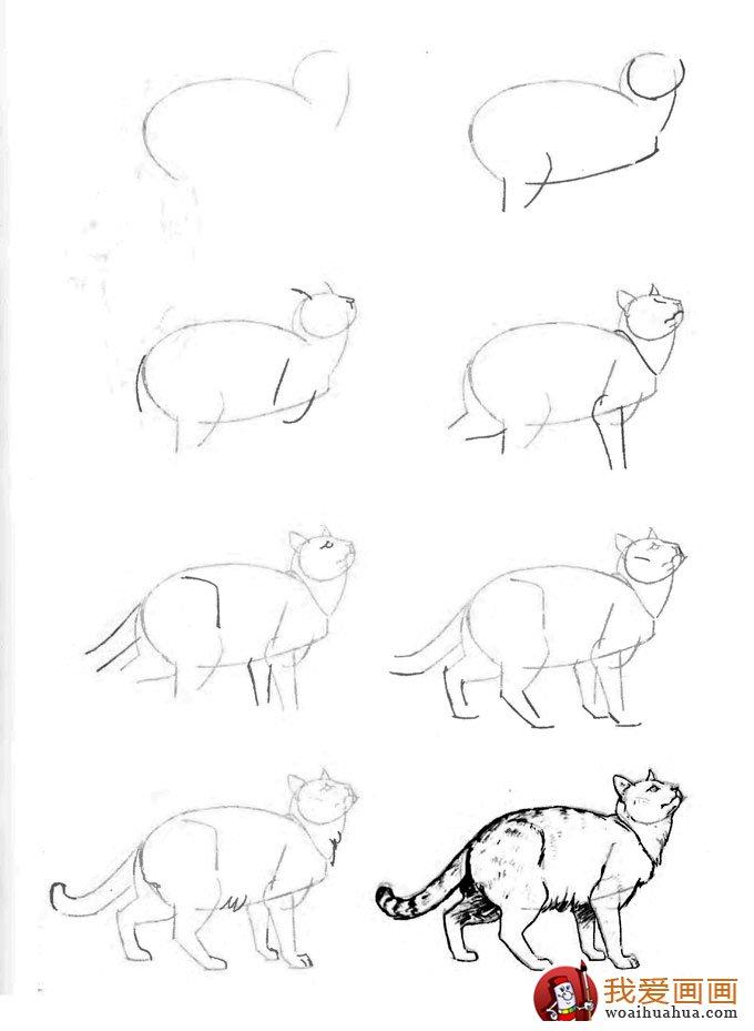 猫的22种画法(21)仰头张望的猫姿势线描速写教程图片