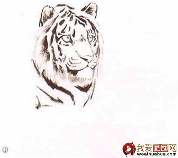 国画老虎绘画教程:水墨老虎画法图文步骤_学画画_我爱