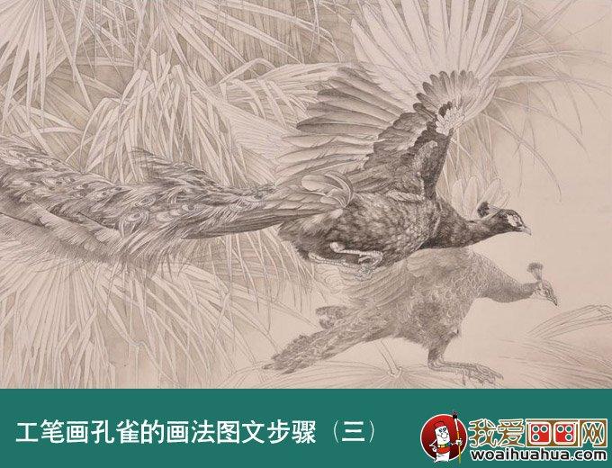 国画孔雀教程 工笔花鸟画孔雀的画法图文步骤 2图片