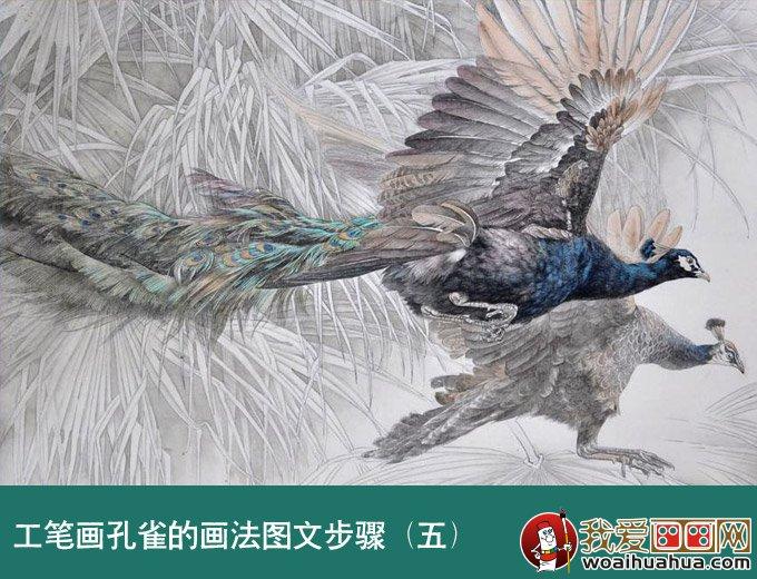 国画孔雀教程 工笔花鸟画孔雀的画法图文步骤 3图片