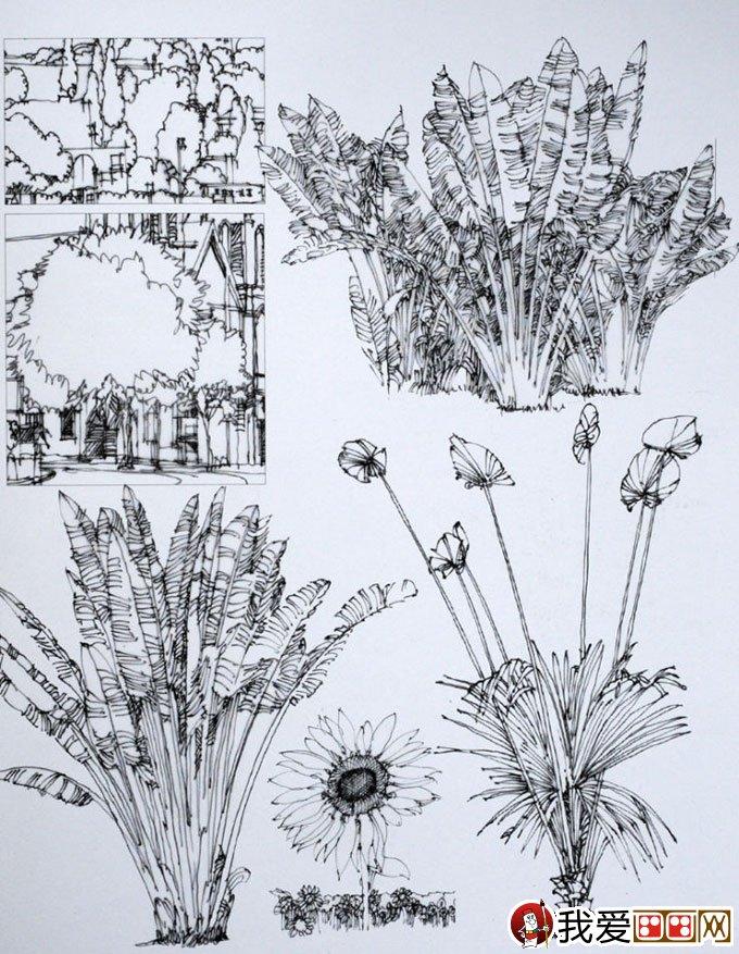 陈新生钢笔画作品:钢笔手绘巴黎建筑图13p(6)