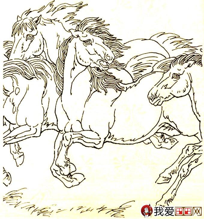 马的素描图片大全:马的白描图骏马线描画法大图34副