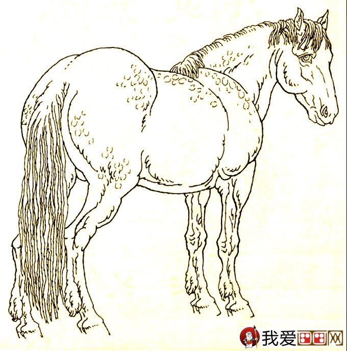 马的素描图片大全 马的白描图骏马线描画法大图34副图片