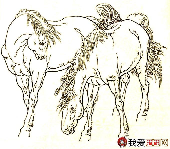 素描动物 > 马的素描图片大全:马的白描图
