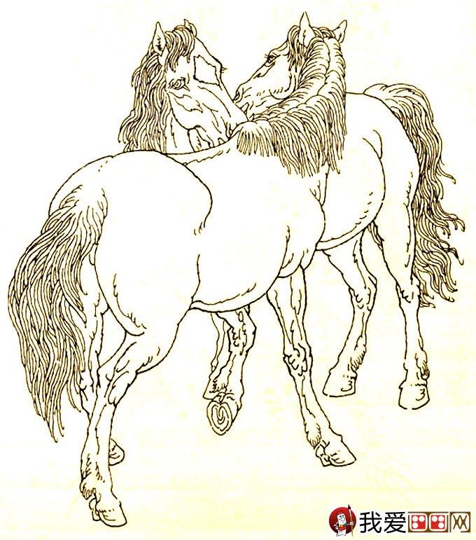 马的素描图片大全 马的白描图骏马线描画法大图34副 2图片