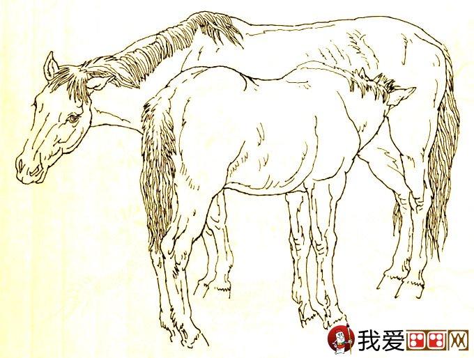 马的素描图片大全 马的白描图骏马线描画法大图34副 3图片