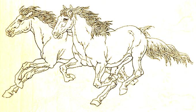 马的白描图骏马线描画法大图34副(4)      马的素描画法图片:马的白描图片