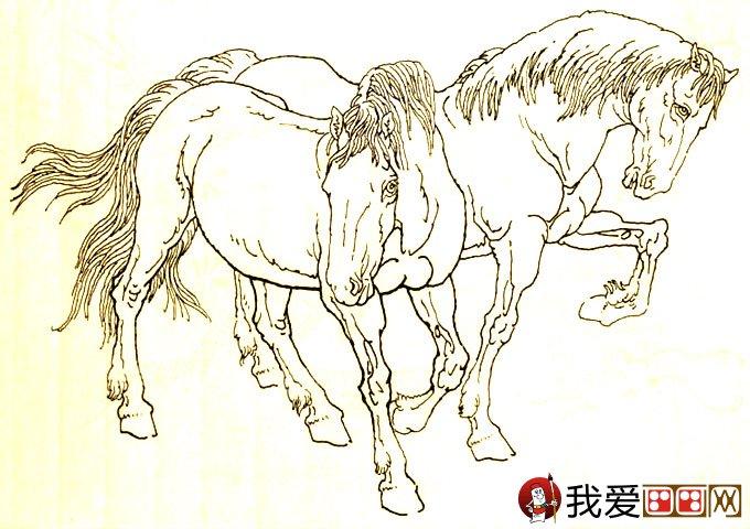 马的素描图片大全:马的白描图骏马线描画法大图34副(4
