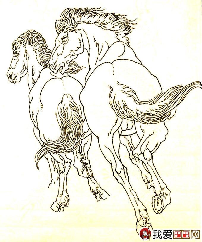 马的素描图片大全 马的白描图骏马线描画法大图34副 6图片