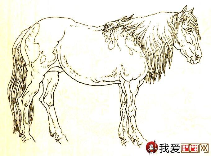 马的素描图片大全 马的白描图骏马线描画法大图34副 5图片