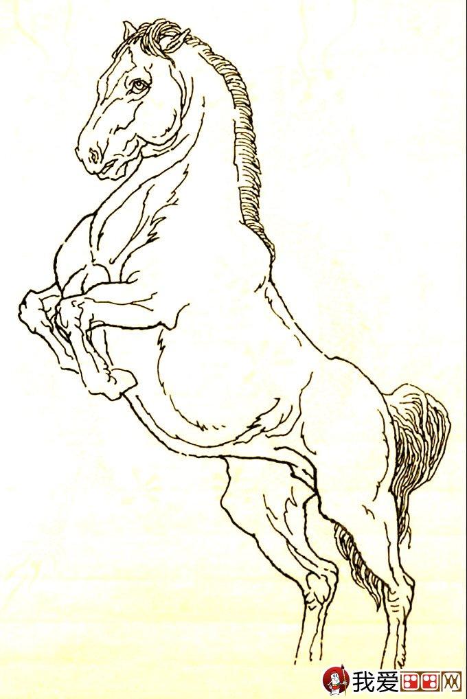 马的素描画法图片:马的白描图骏马线描大图(16)-马的素描图片大图片