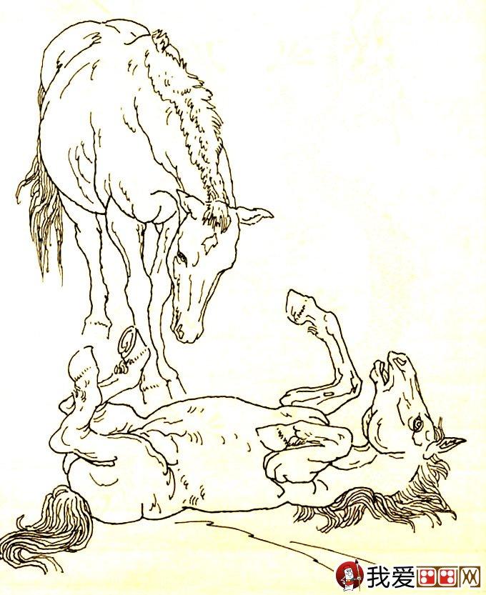 马的素描图片大全 马的白描图骏马线描画法大图34副 8图片