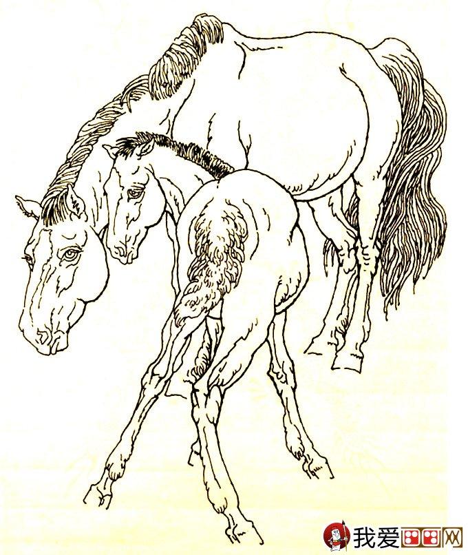 马的素描图片大全:马的白描图骏马线描画法大图34副(9
