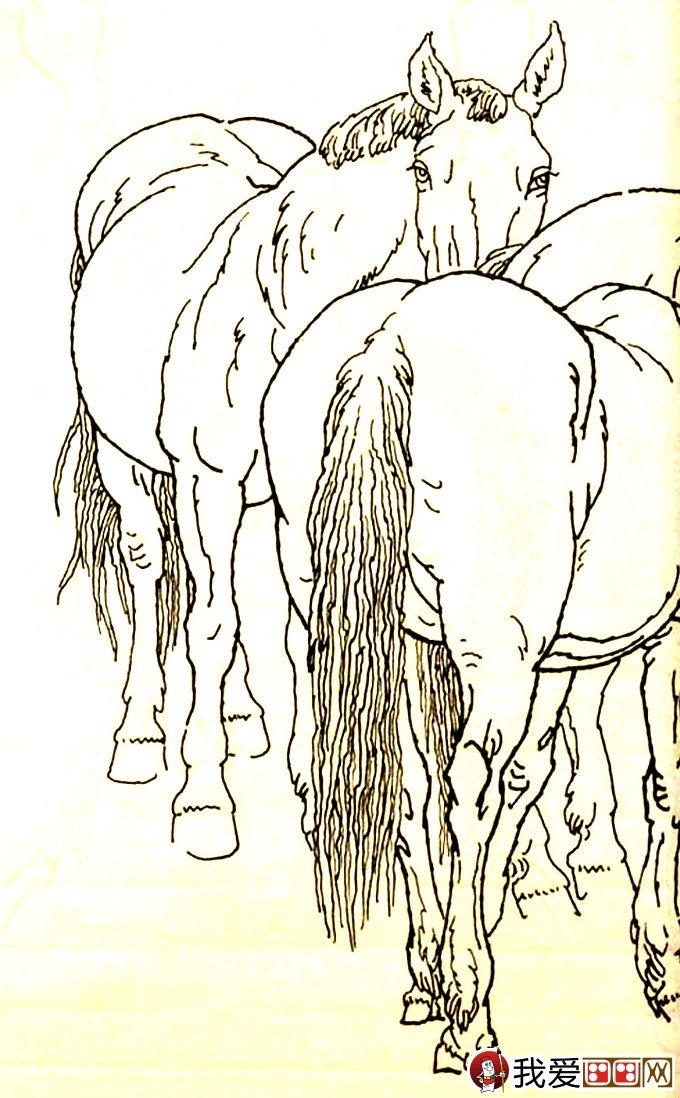 马的素描图片大全:马的白描图骏马线描画法大图34副(10)