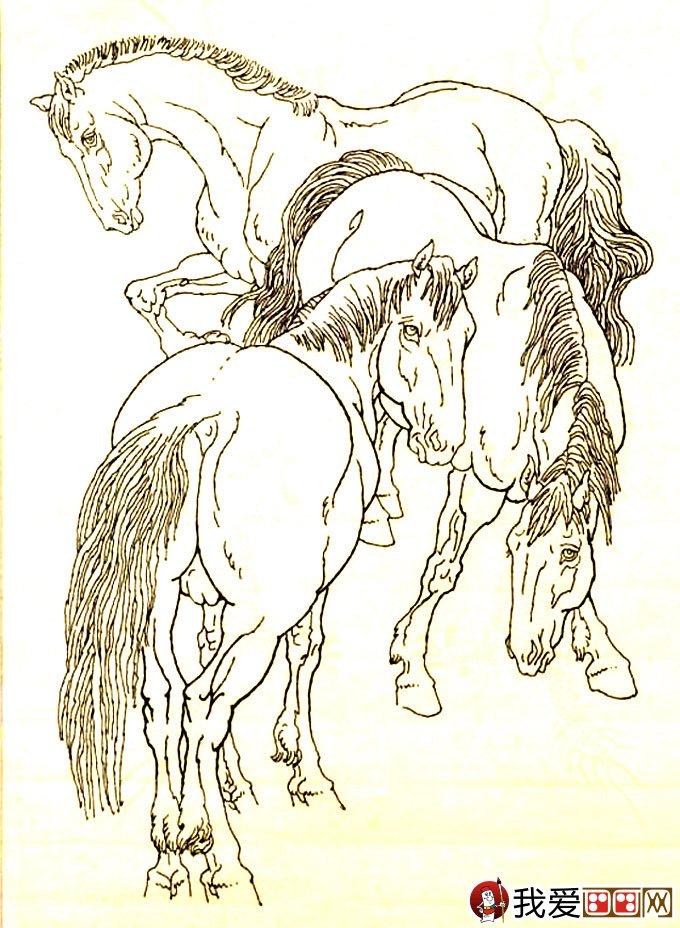 马的素描图片大全 马的白描图骏马线描画法大图34副 10图片