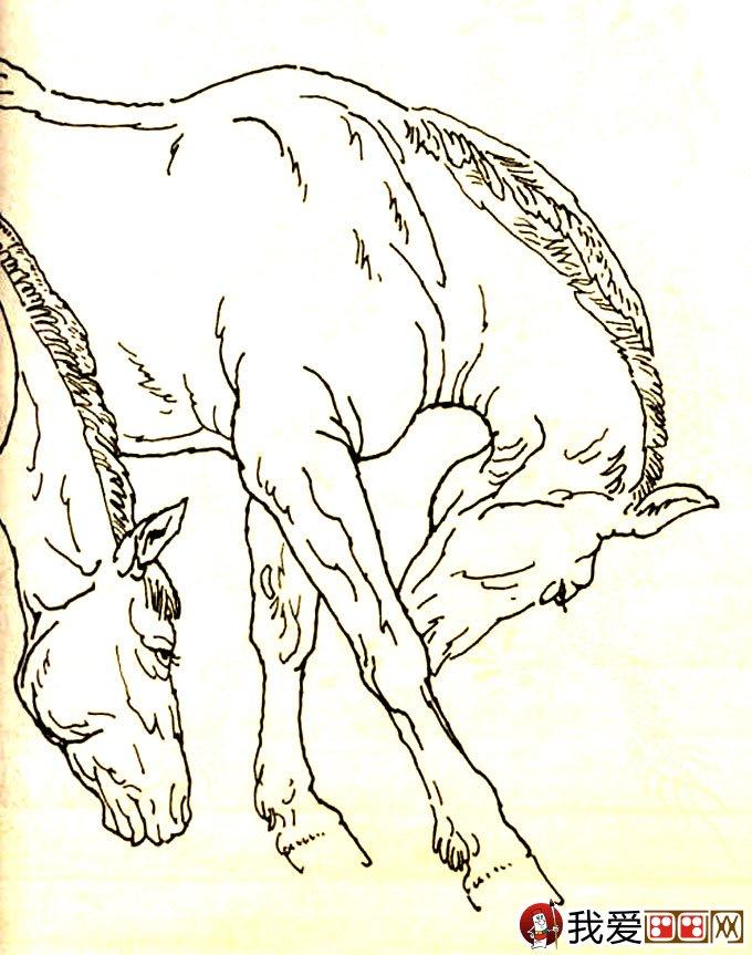 马的素描图片大全 马的白描图骏马线描画法大图34副 11图片