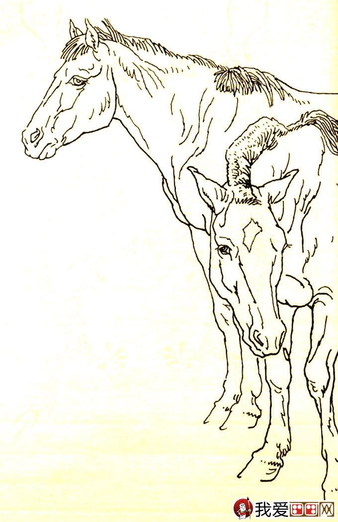 马的素描画法图片:马的白描图骏马线描大图(25)-马的素描图片大图片