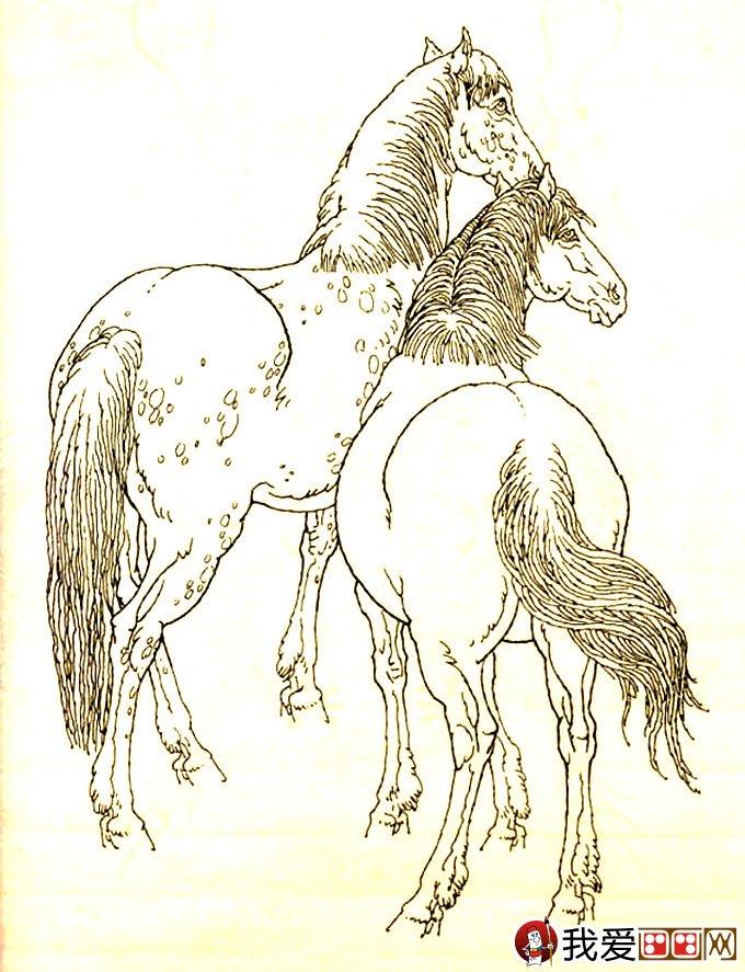 马的素描图片大全 马的白描图骏马线描画法大图34副 13图片