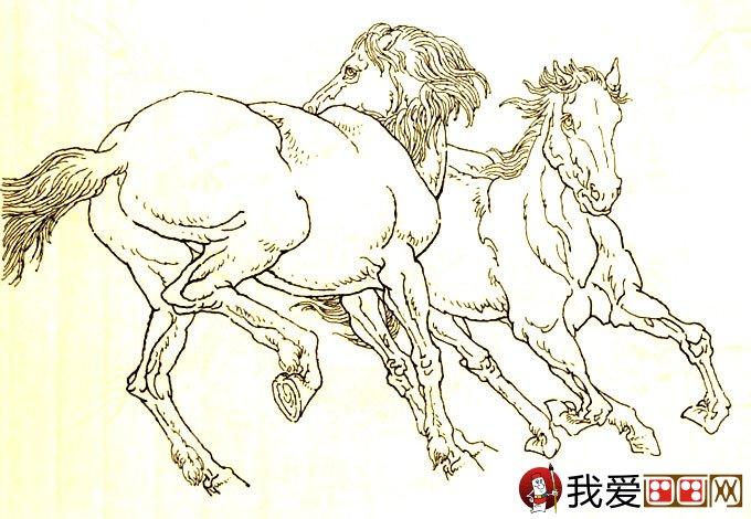 马的素描图片大全:马的白描图骏马线描画法大图34副(15)