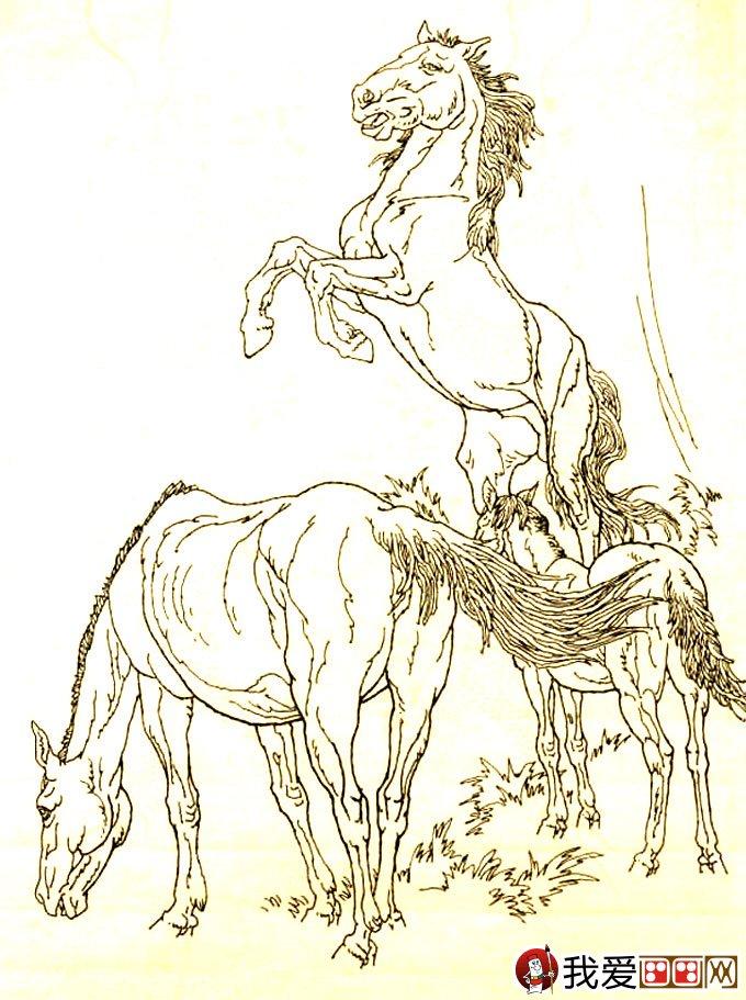 马的素描图片大全 马的白描图骏马线描画法大图34副 16图片