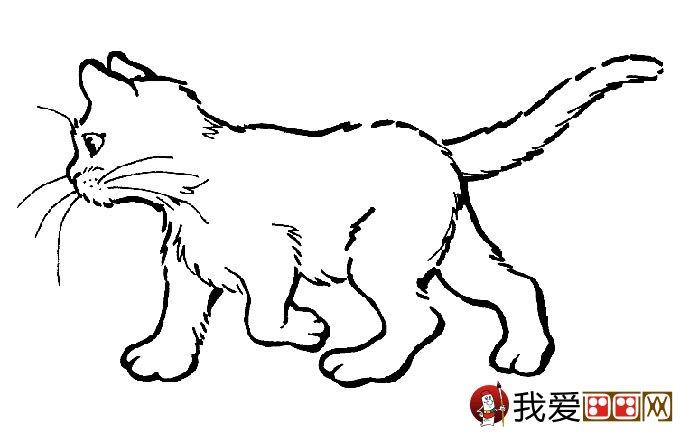 猫的简笔画大全 可爱动物简笔画猫图片16副 4