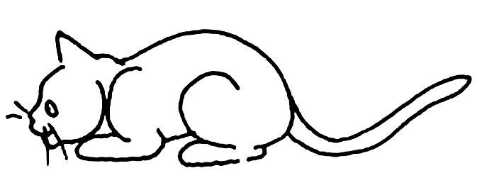 猫的简笔画大全 可爱动物简笔画猫图片16副 7