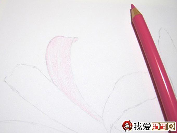 彩铅画花卉绘画教程 彩色铅笔画石蒜的手绘过程 3