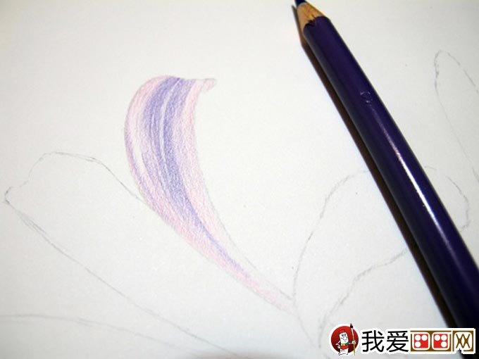 彩铅画花卉绘画教程 彩色铅笔画石蒜的手绘过程(3)