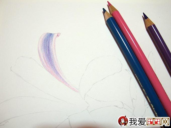 彩铅画花卉绘画教程 彩色铅笔画石蒜的手绘过程(4)