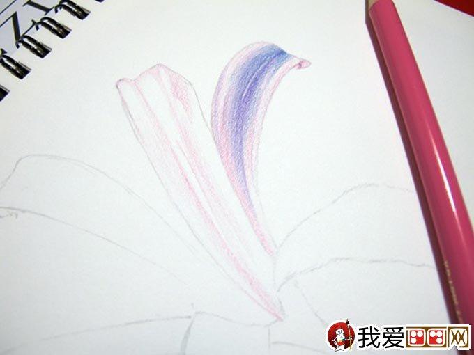 彩铅画花卉绘画教程 彩色铅笔画石蒜的手绘过程(5)