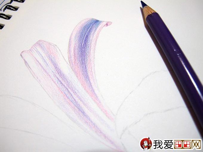 彩铅画花卉绘画教程 彩色铅笔画石蒜的手绘过程 5
