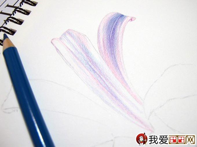 彩铅画花卉绘画教程 彩色铅笔画石蒜的手绘过程(6)