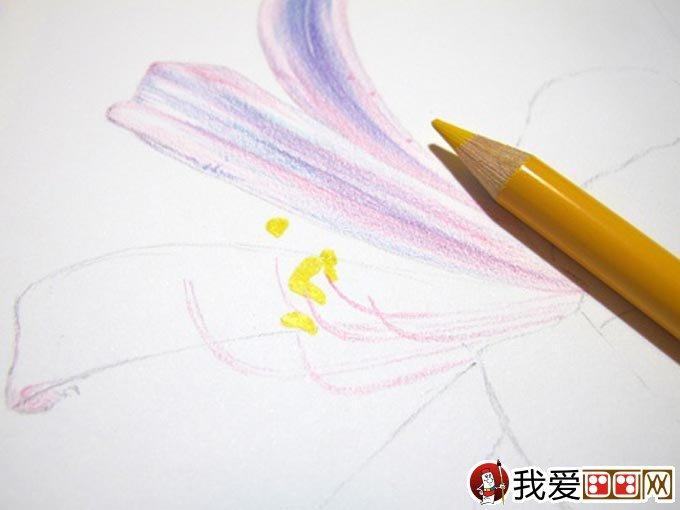 彩铅画花卉绘画教程 彩色铅笔画石蒜的手绘过程(7)