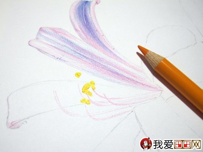 彩铅画花卉绘画教程 彩色铅笔画石蒜的手绘过程 8
