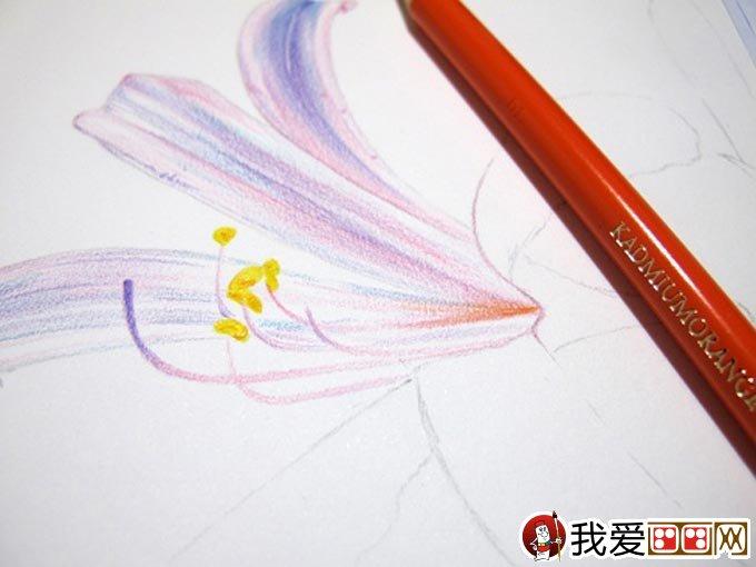 彩铅画花卉绘画教程 彩色铅笔画石蒜的手绘过程 9