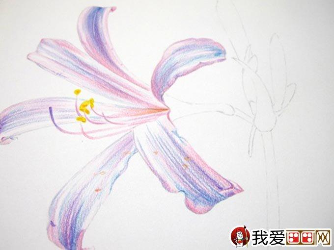 彩铅画花卉绘画教程 彩色铅笔画石蒜的手绘过程(9)